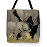 African Elephant Calf With The Herd Tote Bag