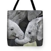 African Elephant Calves Loxodonta Tote Bag