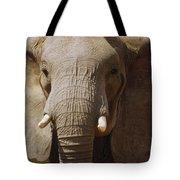 African Elephant Close Up Amboseli Tote Bag