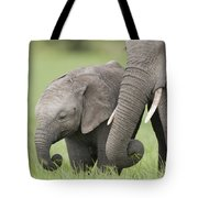African Elephant Juvenile And Calf Kenya Tote Bag