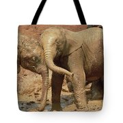 African Elephant Orphans Playing In Mud Tote Bag