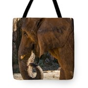 African Elephant Profile Tote Bag