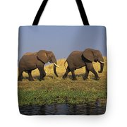 African Elephants, Lake Kariba Tote Bag