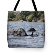African Elephants Swimming In The Chobe River Tote Bag