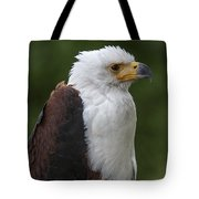 African Fish Eagle Tote Bag