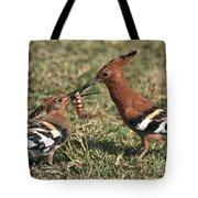 African Hoopoe Feeding Young Tote Bag