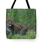 African Leopard Cub In Tall Grass Endangered Species Tote Bag