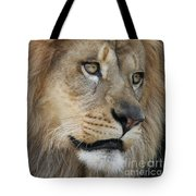 African Lion #5 Tote Bag
