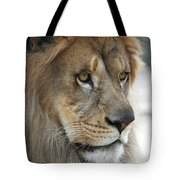 African Lion #8 Tote Bag