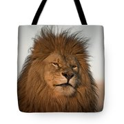 African Lion-animals-image Tote Bag