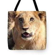 African Lion Cub Resting Tote Bag