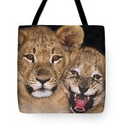 African Lion Cubs One Aint Happy Wldlife Rescue Tote Bag