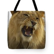 African Lion Male Growling Tote Bag by San Diego Zoo