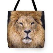 African Lion Male Portrait Tote Bag