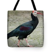 Southern Bald Ibis Strutting Around Tote Bag