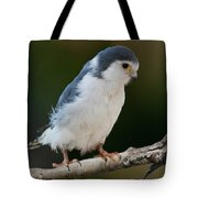 African Pygmy Falcon Tote Bag