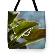 African Violet Leaves With Bokeh   Tote Bag