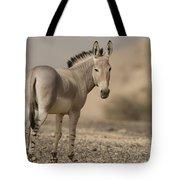 African Wild Ass Equus Africanus Tote Bag