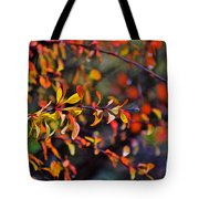 After The Autumn Rain 1 Tote Bag