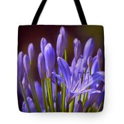 Agapanthus - Lily Of The Nile - African Lily Tote Bag