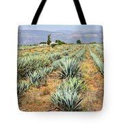 Agave Cactus Field In Mexico Tote Bag