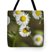 Alabama Wildflower Robin's Plantain - Erigeron Pulchellus Tote Bag