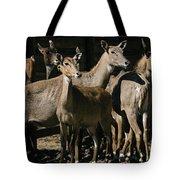 Alert Antelopes Tote Bag