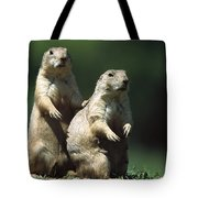 Alert Black-tailed Prairie Dogs Tote Bag