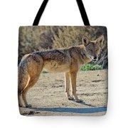 Alert Coyote Tote Bag