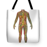 All Body Systems In Male Anatomy Tote Bag