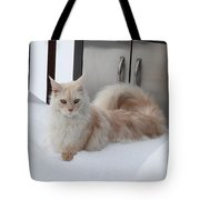 All Paws On Deck Tote Bag