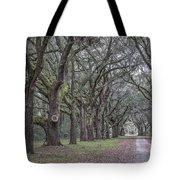 Allee Of Oak Tree's Tote Bag