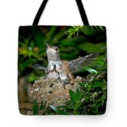 Allens Hummingbird Chicks Tote Bag