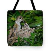 Allens Hummingbird Feeds Young Tote Bag
