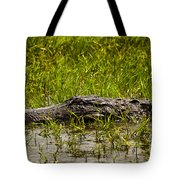 Alligator Amoungst Us Tote Bag