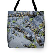 Alligator Babies IIi Tote Bag