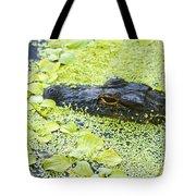 Alligator In Duckweed Looking At Me Tote Bag