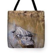 Alligator In Evergrades Tote Bag