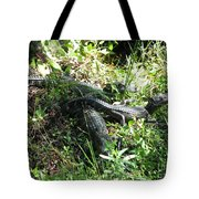 Alligatorbabys Waiting For Mommy Tote Bag