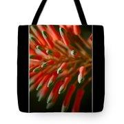 Aloe Bloom Window 3 Tote Bag
