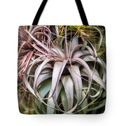 Aloe Vera Cactus Succulent Plant Indoor In Summer Tote Bag