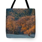 Along Miwok Trail In Winter Tote Bag