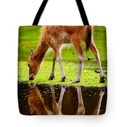 Along The Water Grazing Pere David's Deer Tote Bag