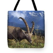 Alpin Ibex Male Grazing Tote Bag by Konrad Wothe