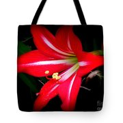 Amaryllis . Hippeastrum Species Tote Bag