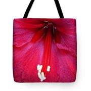 Amaryllis Close-up Tote Bag
