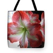 Amaryllis In Bloom Tote Bag