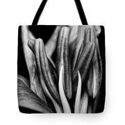 Amaryllis In Bw Tote Bag