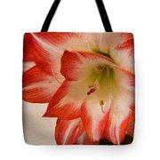 Amaryllis In Spring Tote Bag