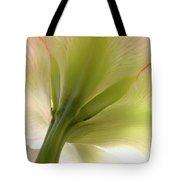 Amaryllis In Sun Tote Bag